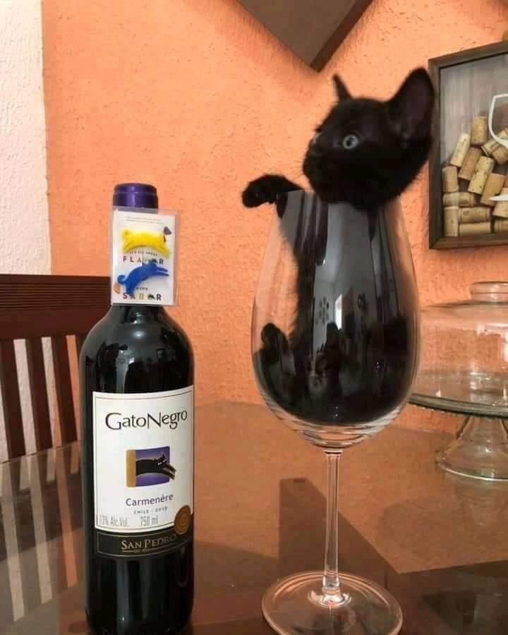Que delicia disfrutar de una buena copa de gato negro... ☺️ https://t.co/VtNoSbLukS