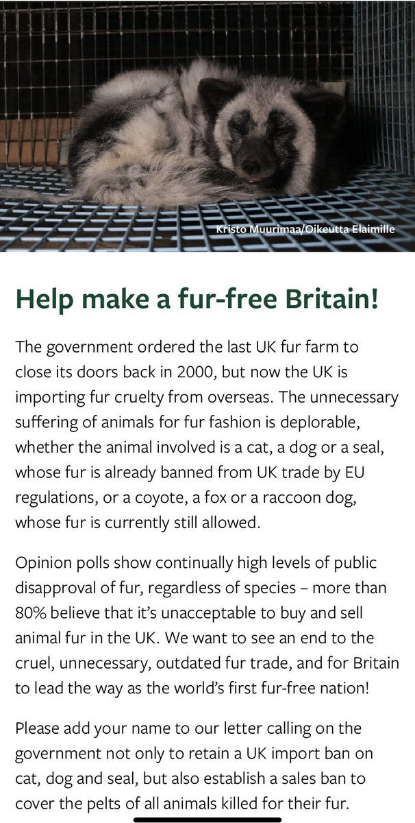 Animals like raccoon dogs, rabbits and foxes suffer in the name of frivolous fur fashion. Please help make a fur free Britain and join me in signing up below to ask the UK government to ban the sale of cruel animal fur today 👇🏻 #FurFreeBritain @HSIUKorg bit.ly/2AbAr8A