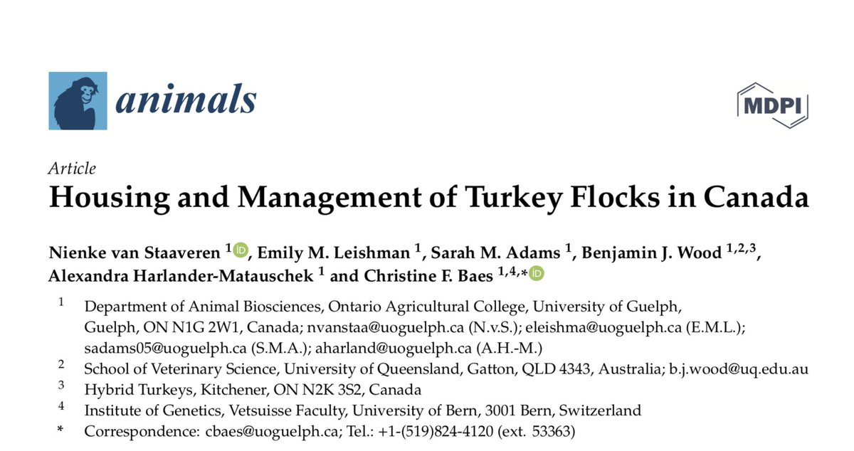 ANOTHER paper from the incredibly productive Harlander Lab! Congratulations @NStaaveren on a great #OA cross-sectional study of turkey 🦃 housing and management, now in @Animals_MDPI 🎉 #UofG   https://t.co/zIU1MMdjFs https://t.co/9av40781Re