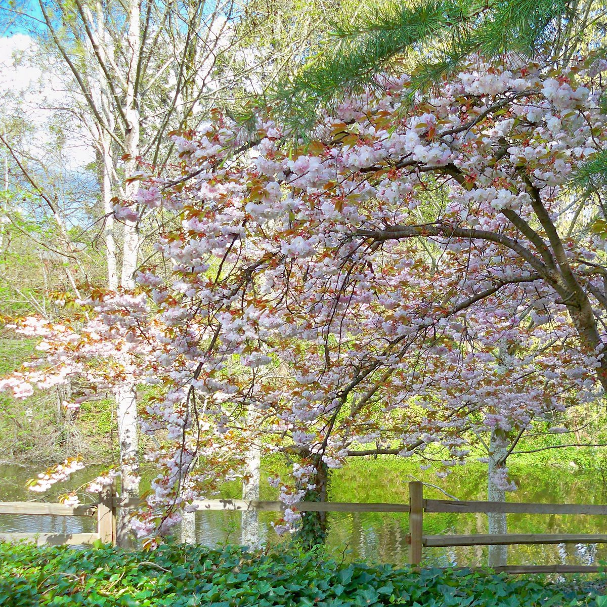 """""""Adopt the pace of nature. Her secret is patience."""" _Ralph Waldo Emerson  #trees #springawakening #naturephotography #natureslover #naturemiracles #naturevibrations  #naturelovers  #gardens  #Flowers https://t.co/9FfRpvF259"""