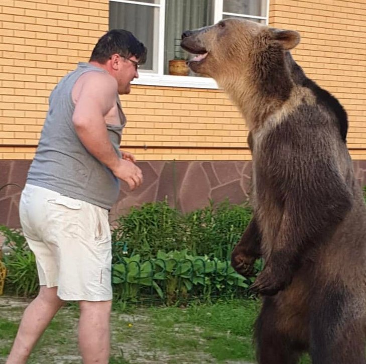 test Twitter Media - Well, this escalated quickly. Giving the bear a 10/10 off form alone. #SquareUp https://t.co/IdOrZo1ERq