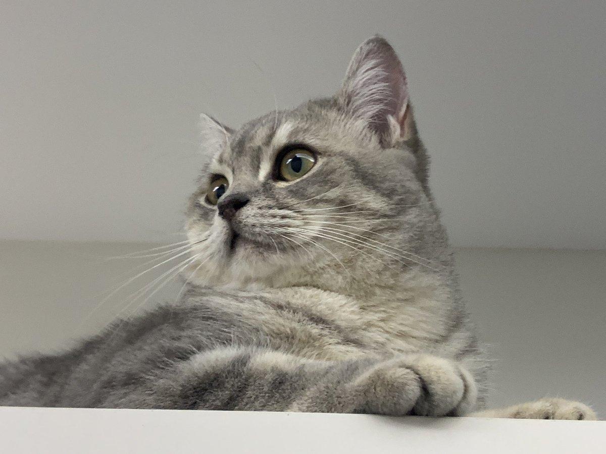 #CatsOfTwitter #friyay #Caturday #cats #catoftheday #catsrule #gatos  #catoftheweek #catvideos #kittyloafmonday #catlife #whiskerswednesday #cutecats #purrsday #FluffyFursday #SundayFunday #jellybellyfriday #toebeantuesdaypic.twitter.com/LiiN7dhjRc