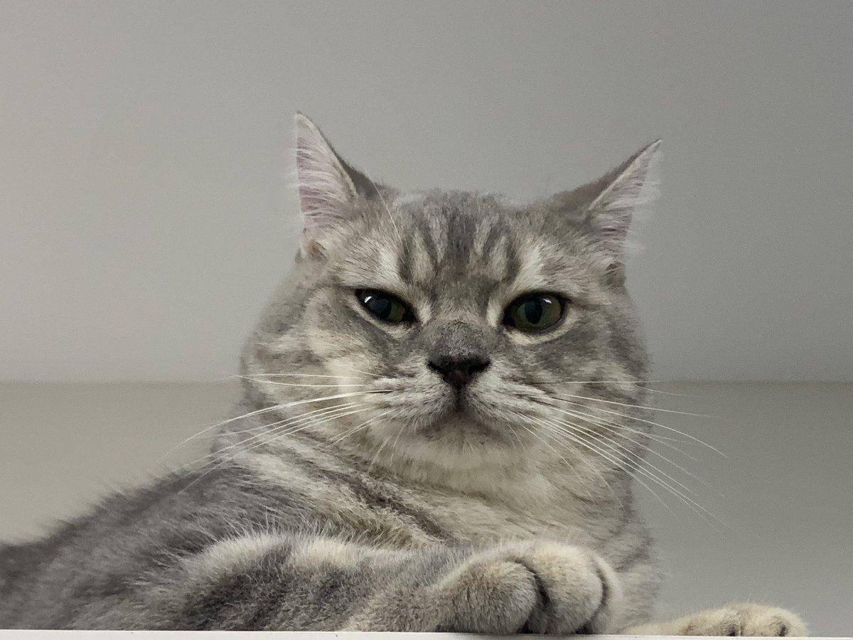 #CatsOfTwitter #friyay #Caturday #cats #catoftheday #catsrule #gatos  #catoftheweek #catvideos #kittyloafmonday #catlife #whiskerswednesday #cutecats #purrsday #FluffyFursday #SundayFunday #jellybellyfriday #toebeantuesdaypic.twitter.com/m3KteZ27lH