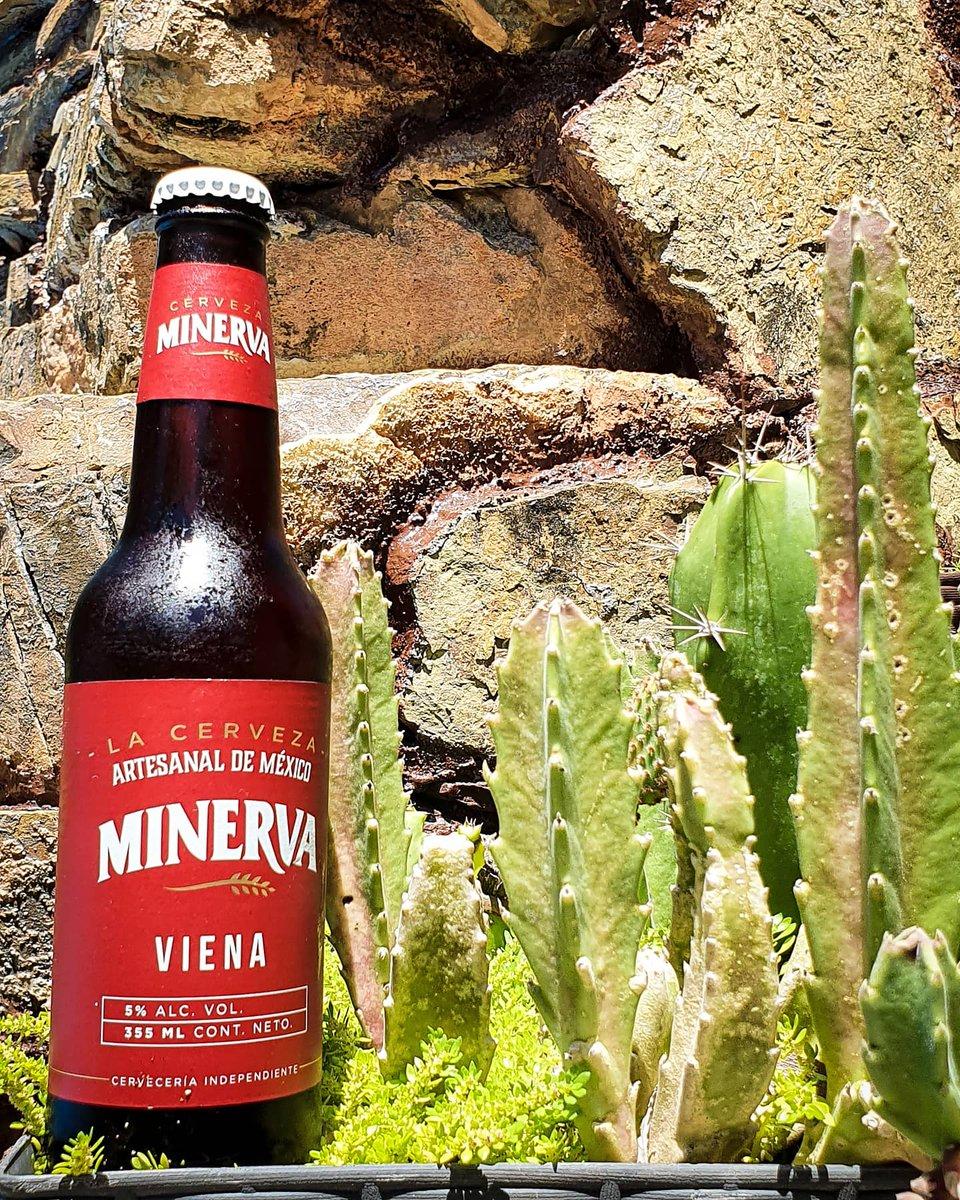 Cual #cerveza #minerva es su favorita? En general saben buenas, para algunos su sabor es fuerte.  Esta es la #Vienna con 5% de alcohol en botella de vidrio de 355ml, nos costó $31.5 pesos en heb.  #beer #lordcerveza #artesanal https://t.co/HJgdjZYSXg