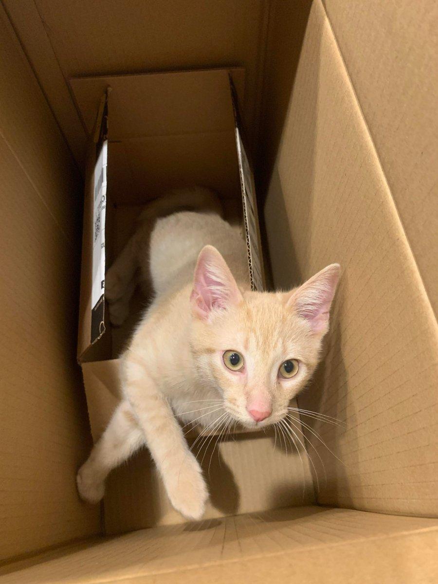 My 4 #Month old #Kitten in a #Box in a #Box   #Cats #Cat #Kittens #Kitten #Kitty #Pets #Pet #Meow #Moe #CuteCats #CuteCat #CuteKittens #CuteKitten #MeowMoe    https://t.co/Zwh1yjsg7M https://t.co/iGmZn3oD9W