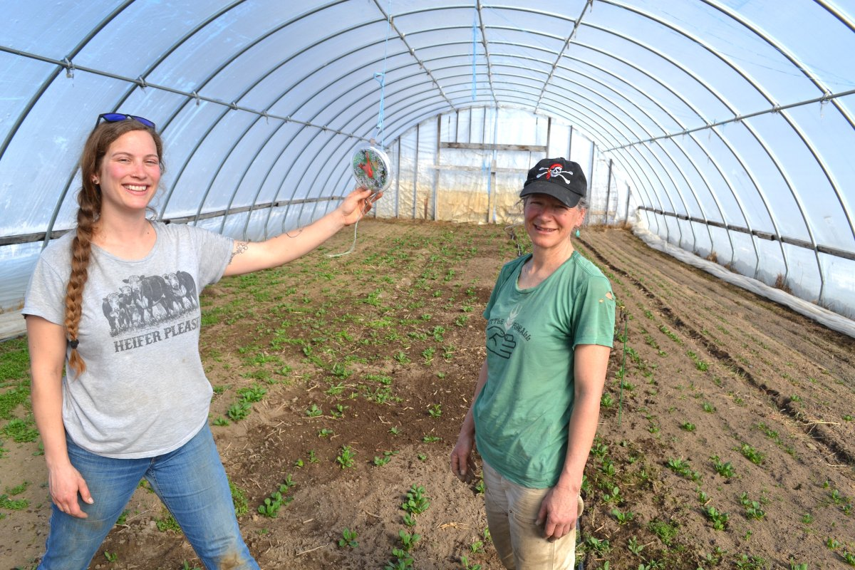 LSP podcast: A desire to continue a legacy (and a love of weed-pulling) eases Foxtail Farm into the hands of the next generation.   Listen Here:  #newfarmers #mnag #farmtransistion #localfood #knowyourfarmer