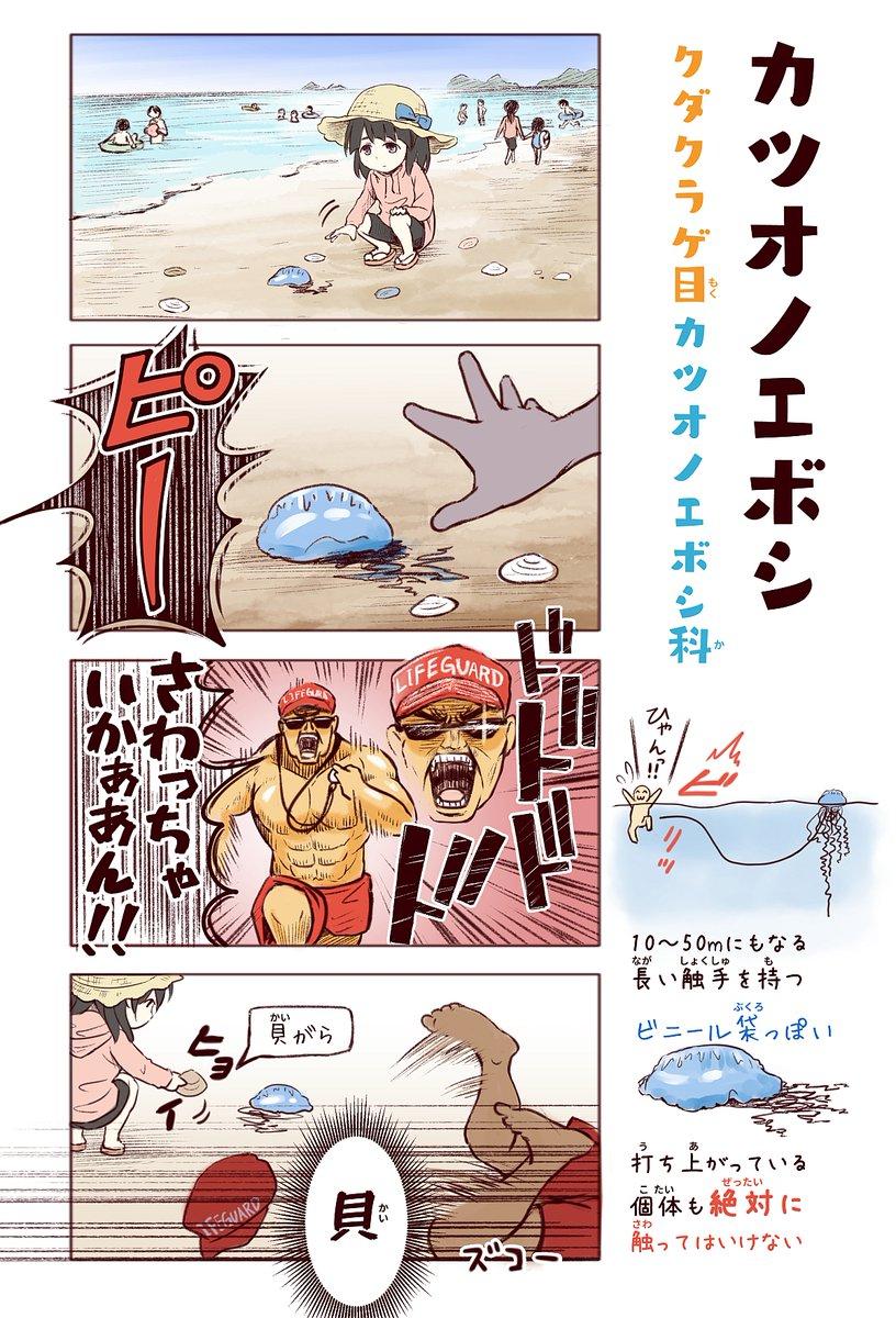 カツオノエボシは「わいるどらいふっ!」1巻の描き下ろしで収録しました。台風などで海が荒れると漂着個体がよく見られます。刺胞から毒が自動で打ち込まれるのでお気をつけくださいm(_ _)m