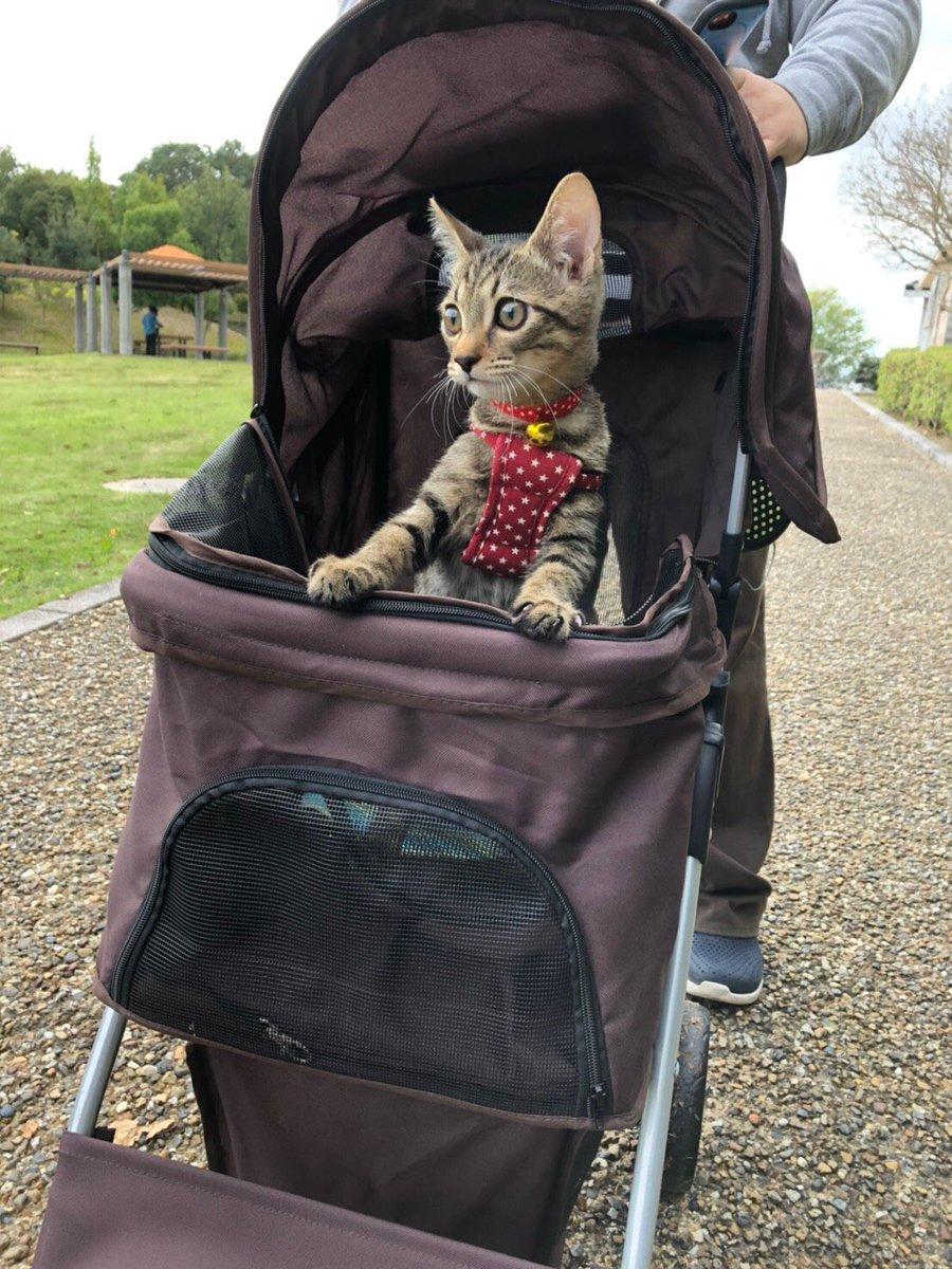 猫とお散歩するためにカート買ってしまいました(衝動)