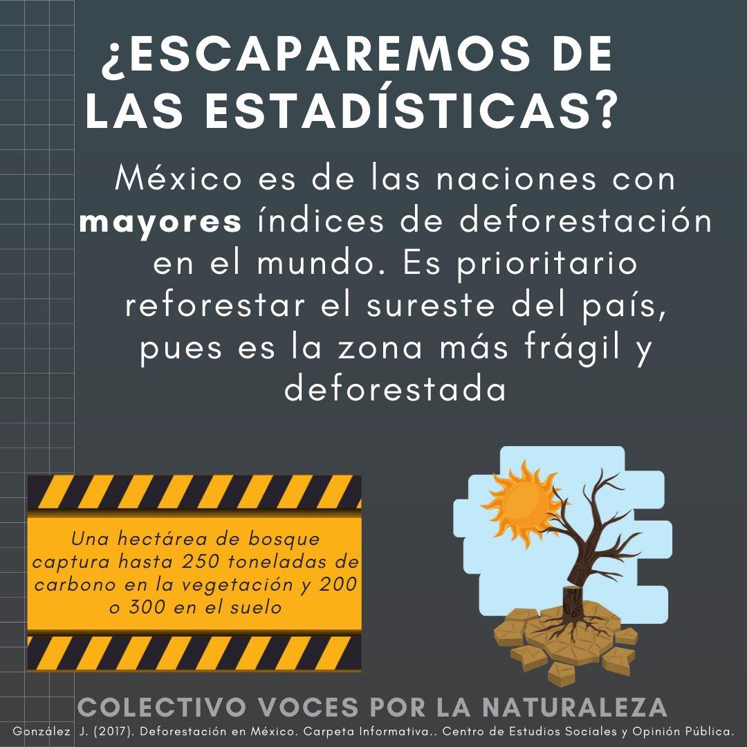 México  #1 en... ¡Índice de deforestación!  A pesar de los beneficios de estos ecosistemas como la #CapturaDeCarbono #ConservarParaVivirpic.twitter.com/9g6UgwTZtx