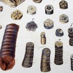 Image for the Tweet beginning: #FossilFriday Detail of a hand-coloured