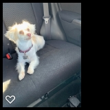 I Love Car Rides!! #dogs #pets #CBD   https://t.co/CckTzNUaWL https://t.co/9sqF05HAOy