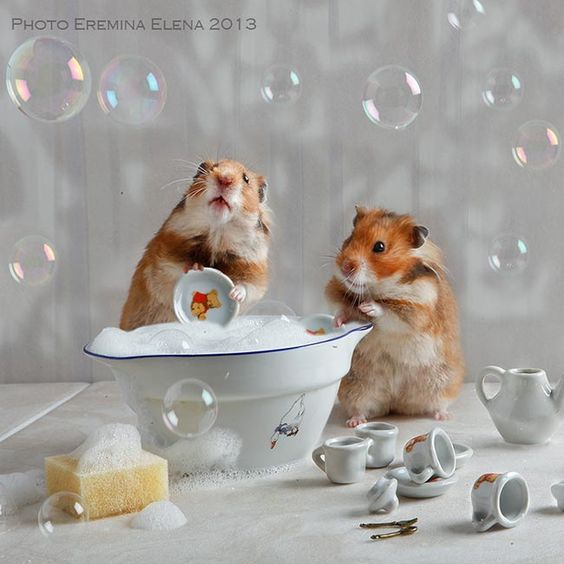 Amazing picture :v #likeforlike #follobackforfolloback #pets #animal #cute #challenge #adorable #hamsters #animallovers #summe https://t.co/2q8Ouf8wT8