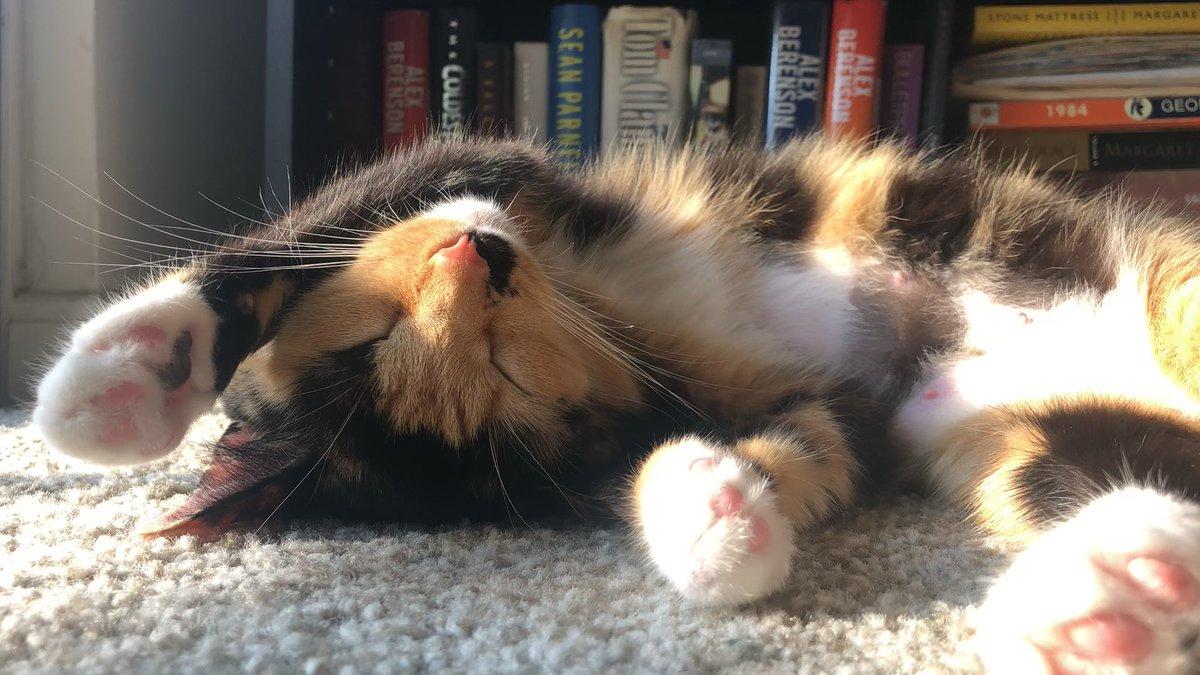 A little #Sunshine #Nap #Time #Lapse for your #Thursday 🌞   #Cats #Cat #Kittens #Kitten #Kitty #Pets #Pet #Meow #Moe #CuteCats #CuteCat #CuteKittens #CuteKitten #MeowMoe    https://t.co/oejNtPPTA3 https://t.co/clpQopgEyx