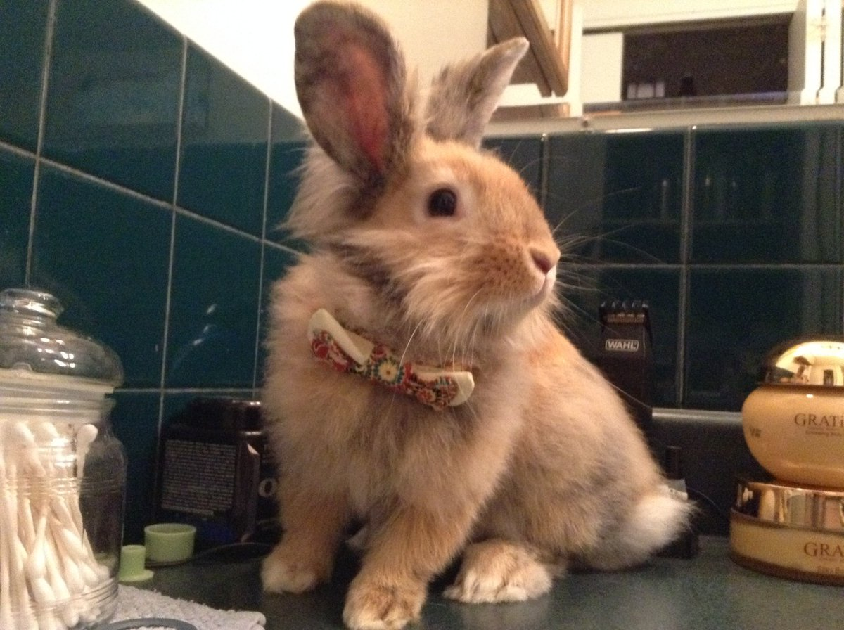 My pet versus what they're named after. #rabbit #bunnies pic.twitter.com/wqM1NKZMY2
