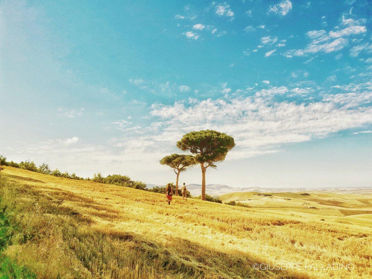 Ci sono alberi che respirano, ti proteggono con l'ombra e alberi come monumenti da arricchire un #paesaggio. #Estate2020 #gius01pal #natura #nature  #giuseppepalladino #regionepuglia #discoverdaunia #dettaglidipuglia #scattidelcuore #weareinpuglia #rocchettasantantonio #pugliapic.twitter.com/GK2LIFbNMe