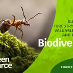 Image for the Tweet beginning: #Biodiversity is vital for our