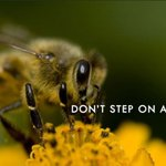 Image for the Tweet beginning: #DontStepOnABeeDay reminds us that the