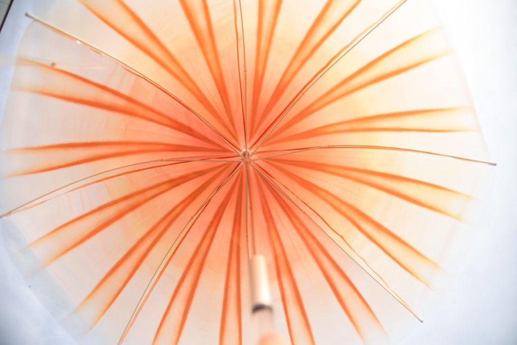 アカクラゲの傘の中に入るとアカクラゲに捕食されてる気分を味わえて興奮します