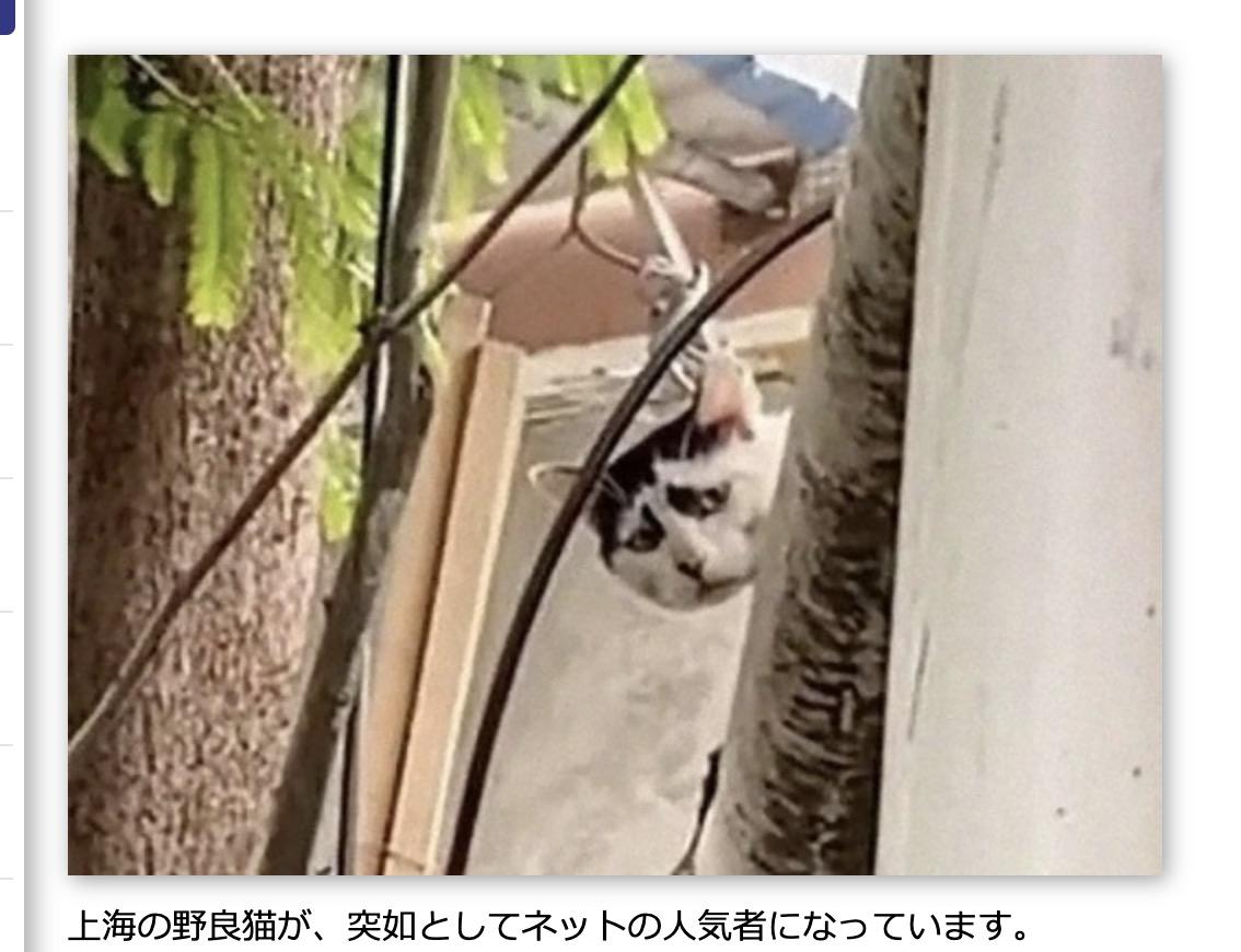 ゴルゴ猫……