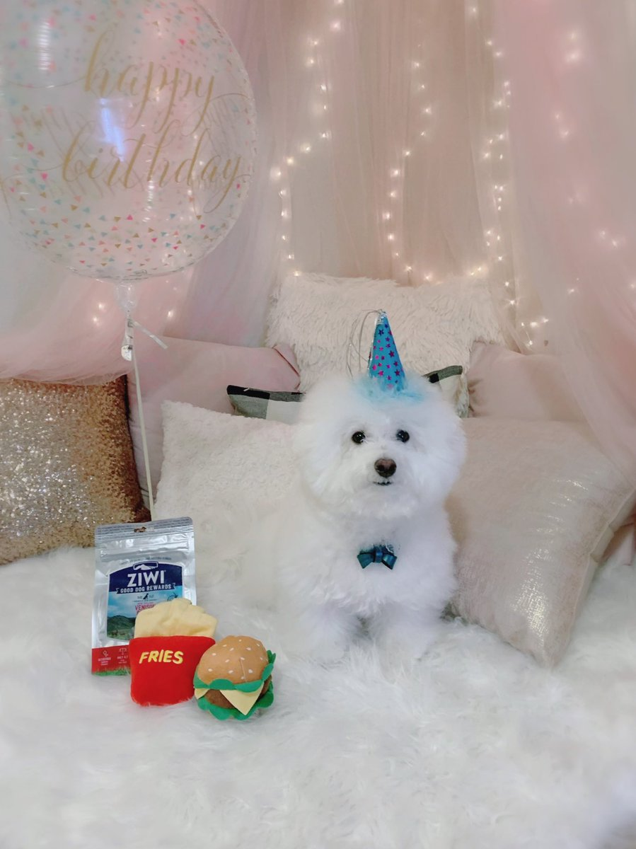 おぷんさん本日お誕生日です!🎊おめでと〜〜〜!!🐶🎂💕4年前と比べるとこんなに大きくなりました🥰うちに来た日を思い出して感慨深い気持ちです…🥺💗おぷんの犬生が幸せでありますように💫4歳のプンちゃんもよろしくお願いします🙇♀️🐶🐾