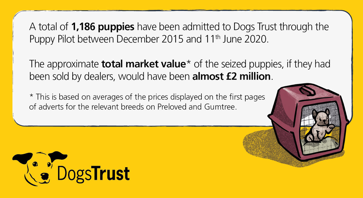 Have you considered where the puppy you've seen advertised for sale online has come from? Don't fuel the #PuppySmuggling trade – do your research and find out more about @DogsTrust work to tackle this cruel trade: dogstrust.org.uk/puppy-smugglin…
