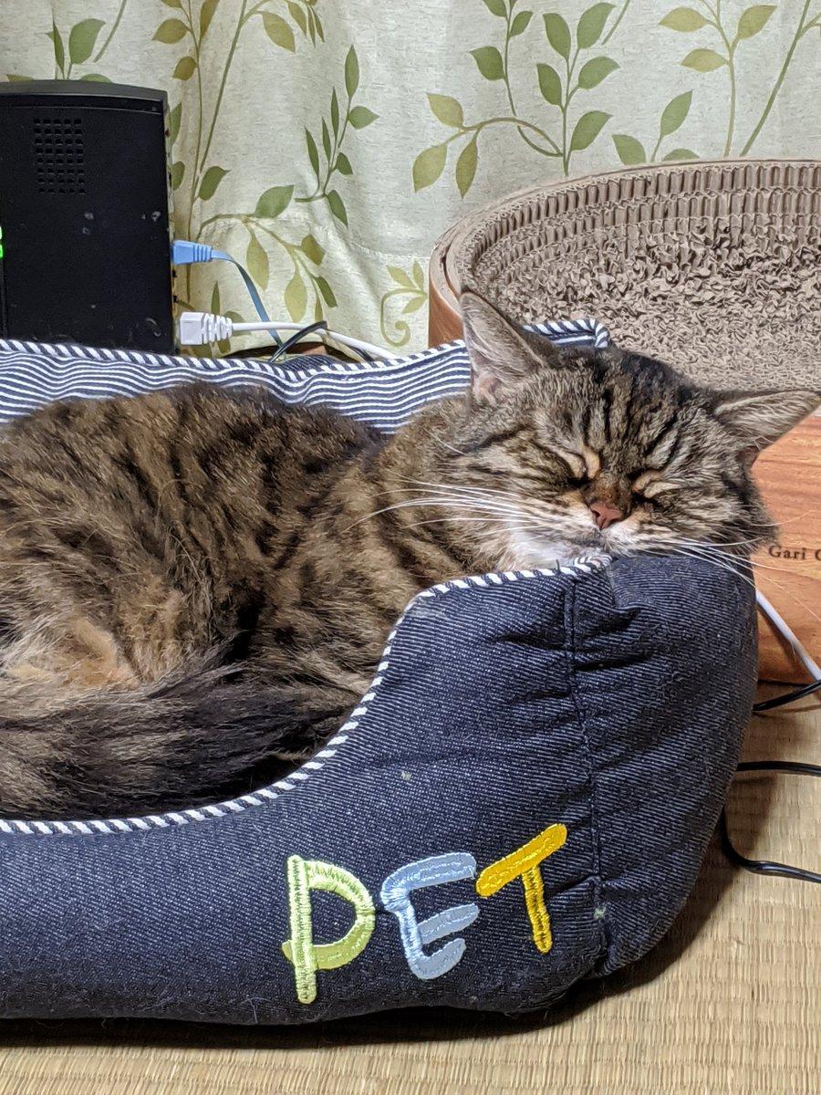 もえ吉が旅立ち遺品整理始めてます。猫砂やフード類は貰い手があるのですが、猫ベッドや爪とぎ、マット類は処分です。我が家はペット葬式しない主義なのでそのまま市に電話して遺体は引き取ってもらいました。