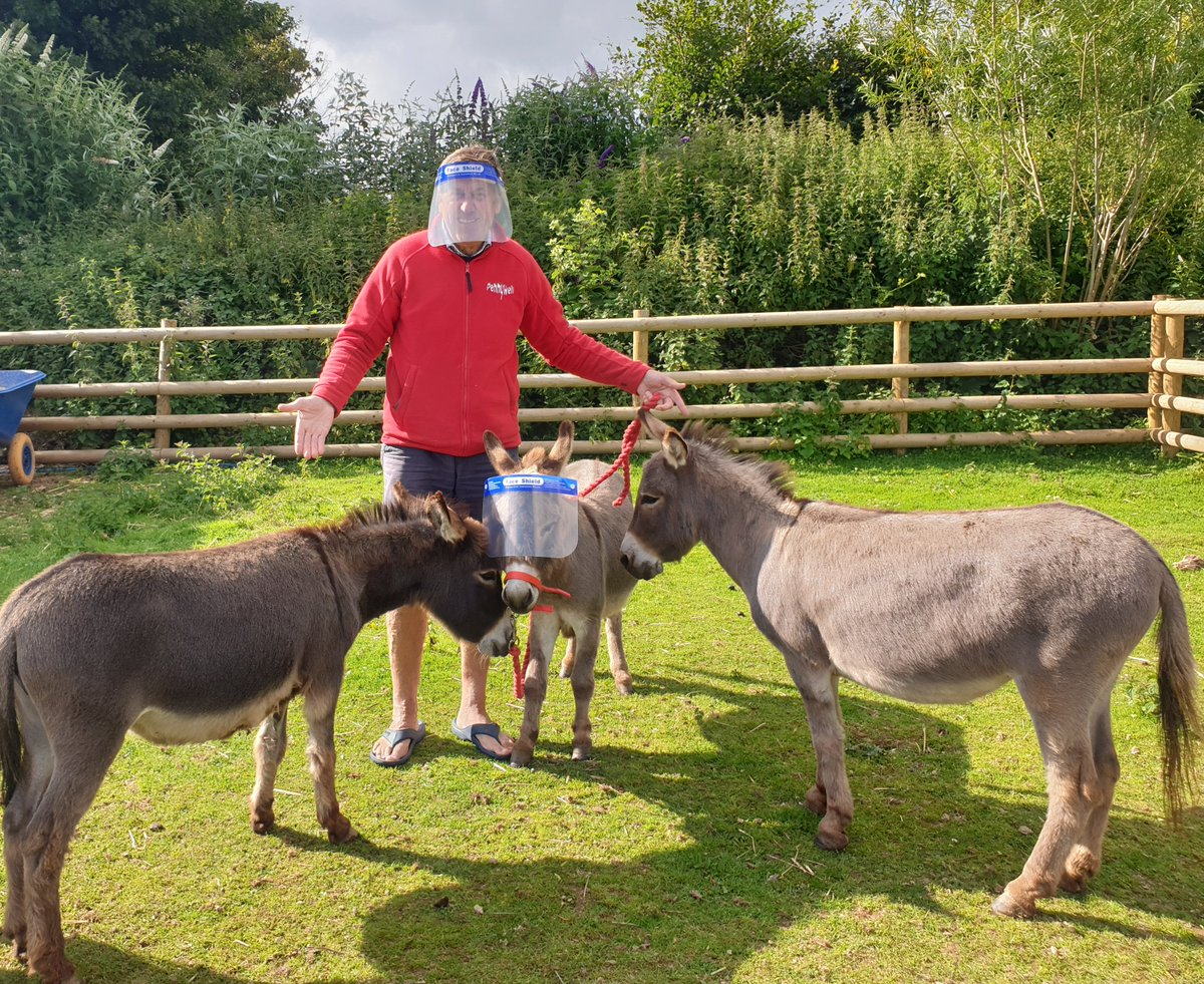 The miniature donkeys and ponies at Pennywell Farm don't seem keen on this social distancing thing. Fortunately the visitors are far less difficult to convince! #SocialDistancing #SafetyFirst @VisitDevon @DevonLiveNews @DevonTopDaysOut @mdaupdates @visitsouthdevon https://t.co/UKjuQUXsKu