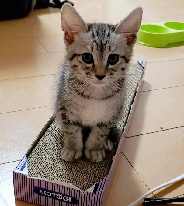 ご飯ください✋あめ#拡散希望 #YouTube見てください!#生後2ヶ月 #猫 #猫好きさんと繋がりたい #猫好き #猫かわいい #猫のいる生活 #子猫 #猫画像 #猫写真