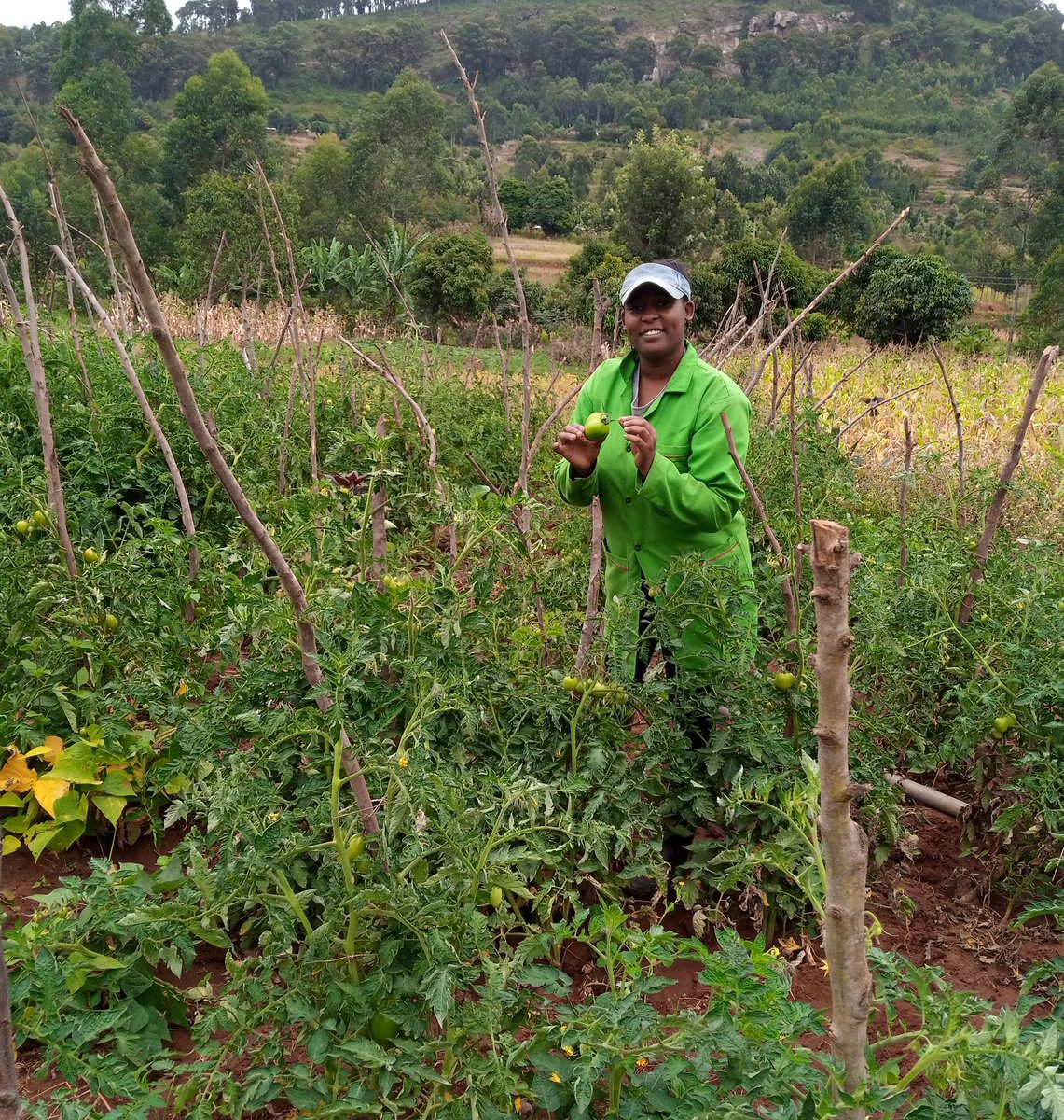 After the day We refresh the mind in tomato farm #Cloud9Challenge  #fridaymorning <br>http://pic.twitter.com/6nhkkQ44QG