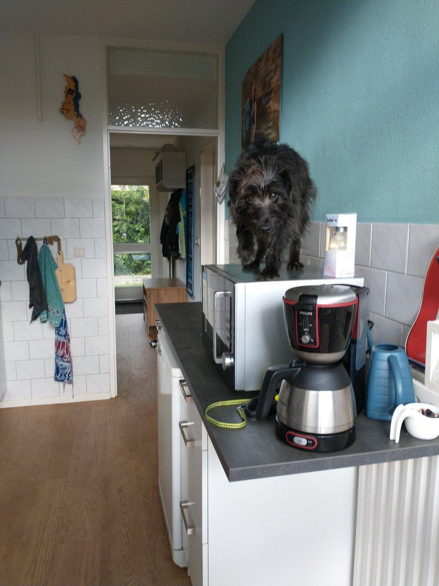 Echt onze hond is een kat geloof ik #WakandaForever of een muis.. Als de baas van huis is...... Gek beest 😂 https://t.co/rYhQHzvUNA