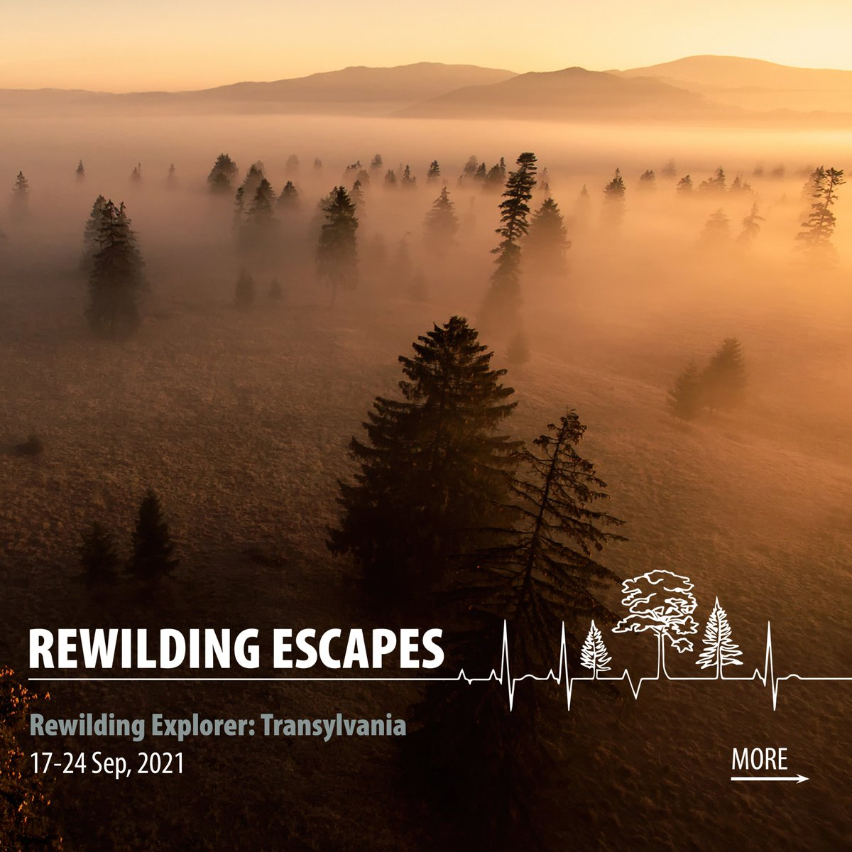 In 2021 were headed to Romania, exploring one of Europes last remaining wilderness areas. Well watch bears from forest hides, immerse ourselves in pristine forests & meet locals to hear 1st-hand how traditional communities live alongside top predators. scotlandbigpicture.com/rewildingescap…