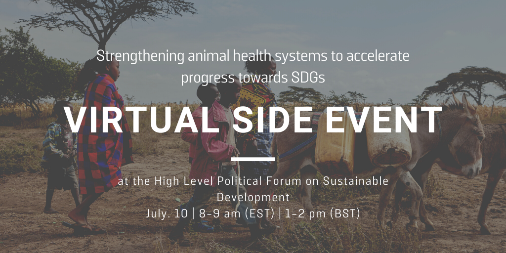 WE ARE LIVE! Join our #HLPF2020 event on strengthening #animalhealth systems to accelerate progress towards #SDGs. We have some brilliant speakers https://t.co/d9bX2sVdy6  #Action4AnimalHealth  @dopjp @CleavelandSarah @laurakavata @IBAHCM @OIEAnimalHealth @TheBrookeEA https://t.co/FUrIxzi9Ol