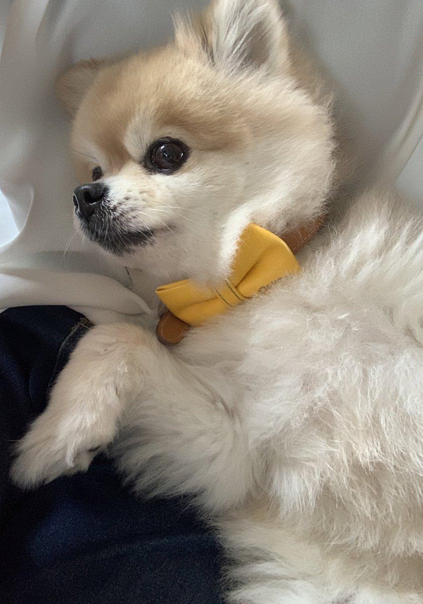 @mihana_suga 犬猫とかじゃなく苺(絵)に癒やしを求めてる人を初めて見ました😂笑 良かったらうちのおいぬも可愛いから癒やしの対象に加えてあげて…(*´―`*)笑 https://t.co/sI4zGLTH3q