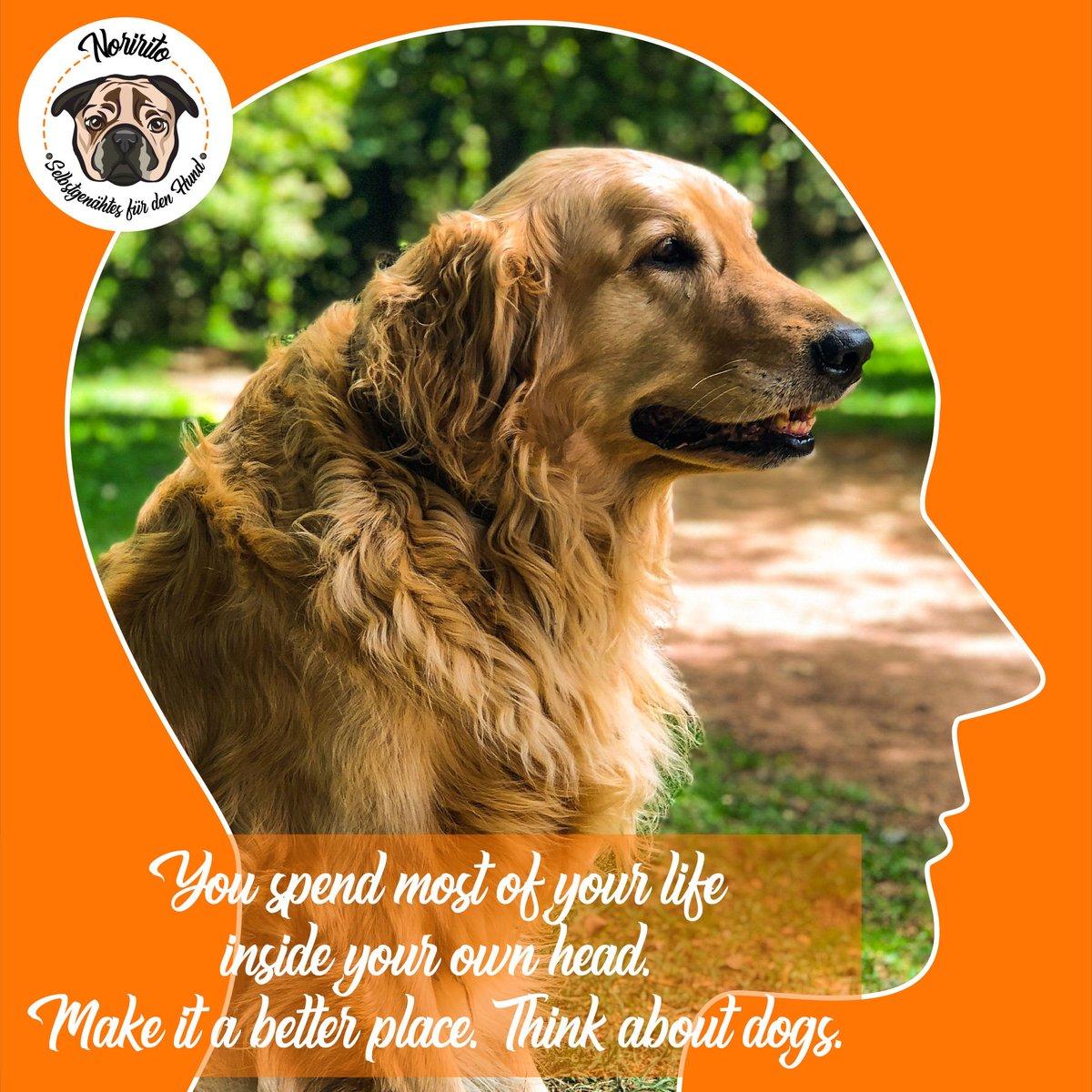 Die Welt wäre ein so viel besserer Ort   Schickes Wochenende!  #thinkaboutdogs #ilovedogs #hundeliebe #doglove #souldog #seelenhund #friyay #friday #freitag #happyfriday #wochenende #happyweekend #retriever #goldenerretrieverpic.twitter.com/f8ThhWp42n