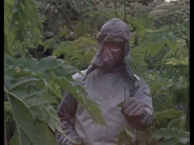 #OnThisDay 1970: Nationwide was at the scene of an invasion - by giant hogweed.