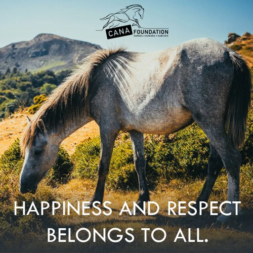 Humans, animals, and nature all deserve happiness and respect in this world.  Learn more about #REWILDING with us at https://t.co/MbIgi4Y6fN - #savethehorse #canafoundation #stophorseroundups #rewilding #horselovers #animalprotection #animalrights #animalrescue #climatebreakdown https://t.co/RrLhezqsjd