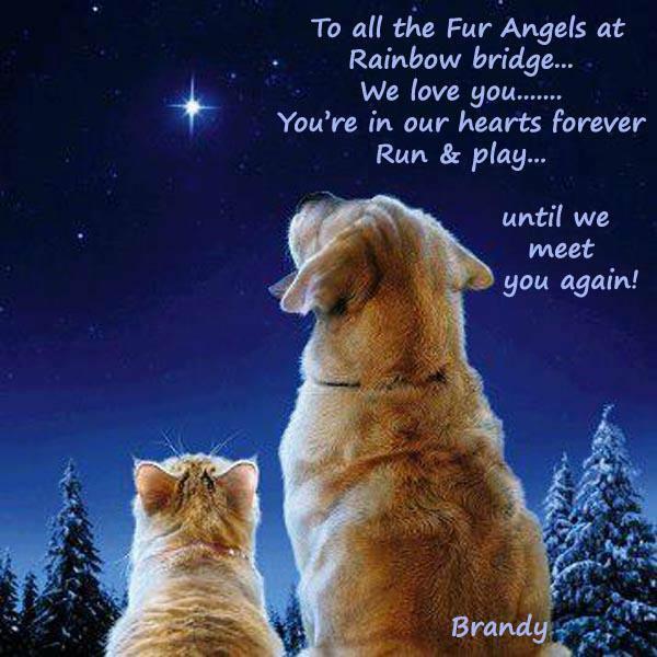 #HealingPurrsPawty Furr dem OTRB, furreffurrz in our hearts ❤️❤️❤️ Fanx yoo furr coming, see yoo next time @Mr_Pie #WLF 💙💙💙 https://t.co/veVcqDEmht