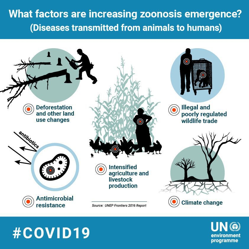 #COVID19 is part of a growing trend of emerging zoonotic diseases, as habitat loss & wildlife exploitation reduce barriers between humans & animals. New @UNEP report has steps for preventing future pandemics. bit.ly/3iztAd3