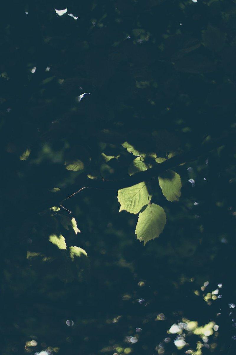 Emerald in the Darkness https://pixelplan.co.uk  @canon @manfrotto_uk@NatGeoPhotos@photography@ICPhotog@DigitalSLRPhoto@lensculture@PhotographyWeek@lonelyplanet #travel #photography #photographer #photo #Photooftheday #canon70d #canon @canon70D #pixelplanpic.twitter.com/QWOBLFHELp