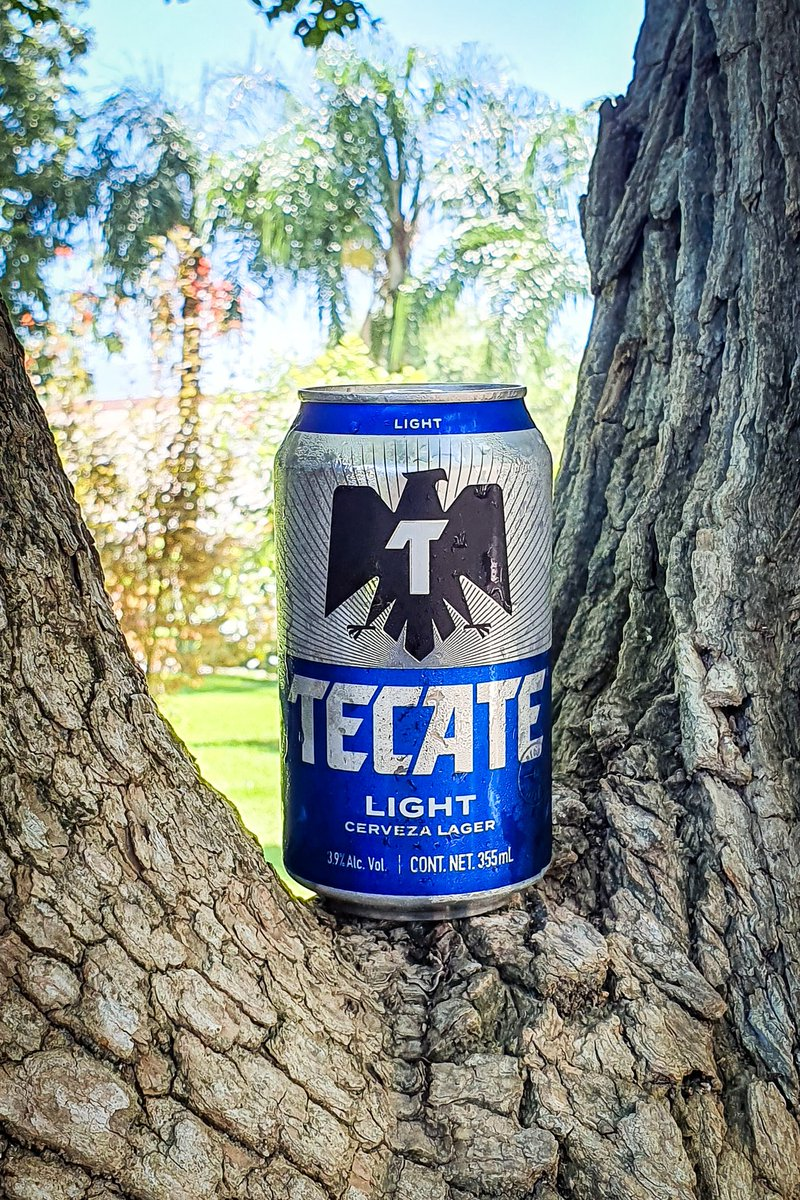 Una cerveza clásica en el norte del pais, que opinan de la Tecate Light? Excelente para este inicio de canicula.  🍺 Tecate Light 🏷 Light Lager 🥴 3.9% Alc. Vol. 💧 355ml 📍 Monterrey, N.L 💸 $15 mxn aprox. © LordCerveza . . #Tecate #tkt #tktlight #beer #cerveza #Monterrey https://t.co/muGcp9kywx