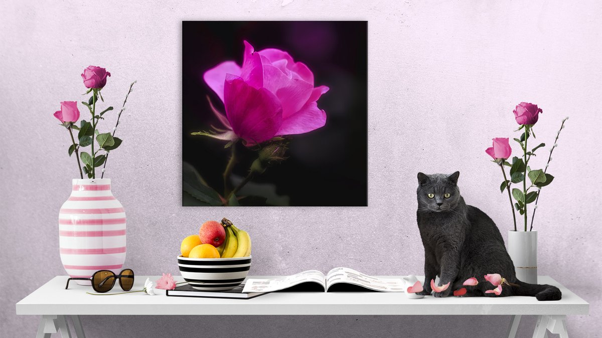 "Love roses on black? Check out ""Anniversary Rose"" canvas print by Anita Pollak. A perfect gift for an anniversary or any special occasion! https://bit.ly/AnniversaryRoseCanvas … #anniversary #rose #canvasPrint #anniversaryGift #pinkFlower #gardenflowers #rosePetals #giftsoflove #square #wallartpic.twitter.com/oChDck9B5L"