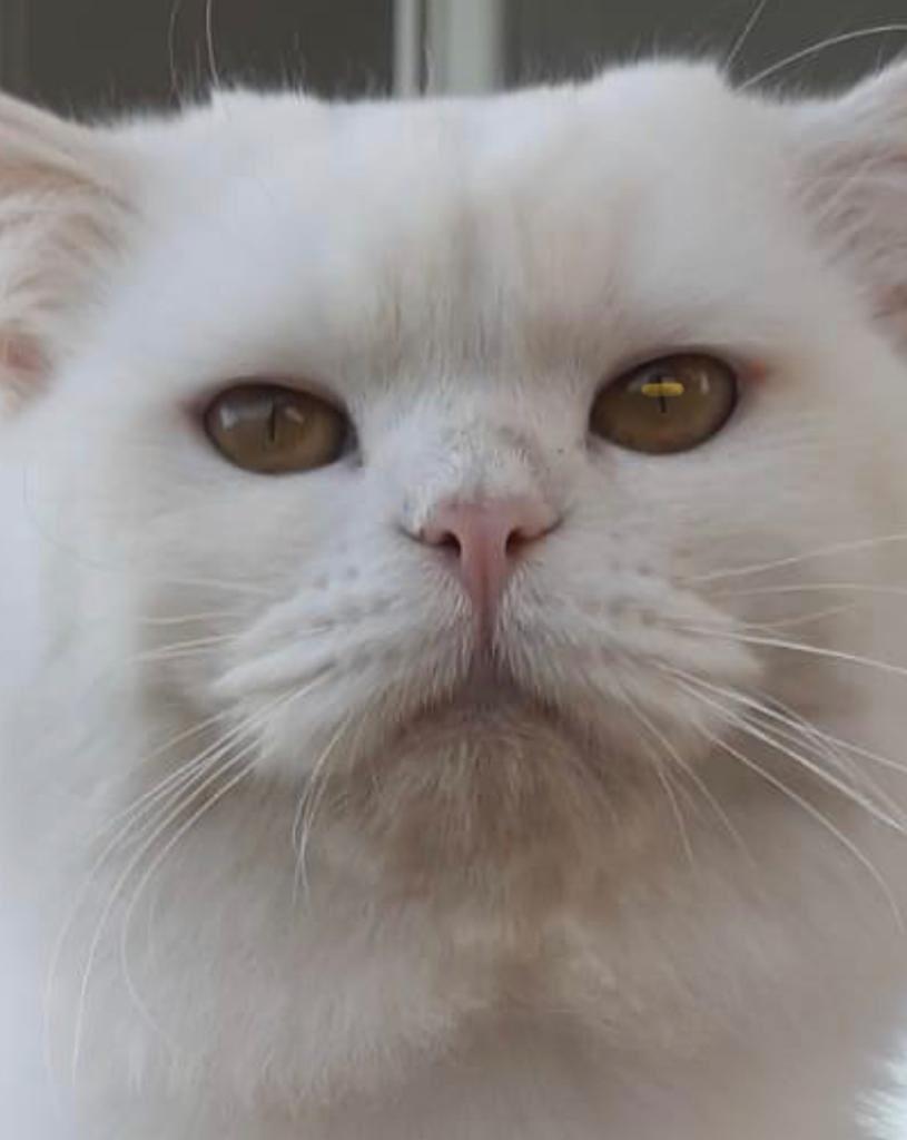 #CatsOfTwitter #friyay #Caturday #cats #catoftheday #catsrule #gatos  #catoftheweek #catvideos #kittyloafmonday #catlife #whiskerswednesday #cutecats #purrsday #FluffyFursday #SundayFunday #jellybellyfriday #toebeantuesdaypic.twitter.com/d87XQaSpOF