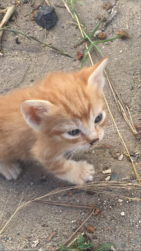 #Maltepe'lilerin dikkatine,   Cevizli'de sokakta bakılan bir kedi sahiplendirilmek istenmektedir. Ayrıntılı bilgi için: (0537) 957 13 53 https://t.co/86C3ZYCk23