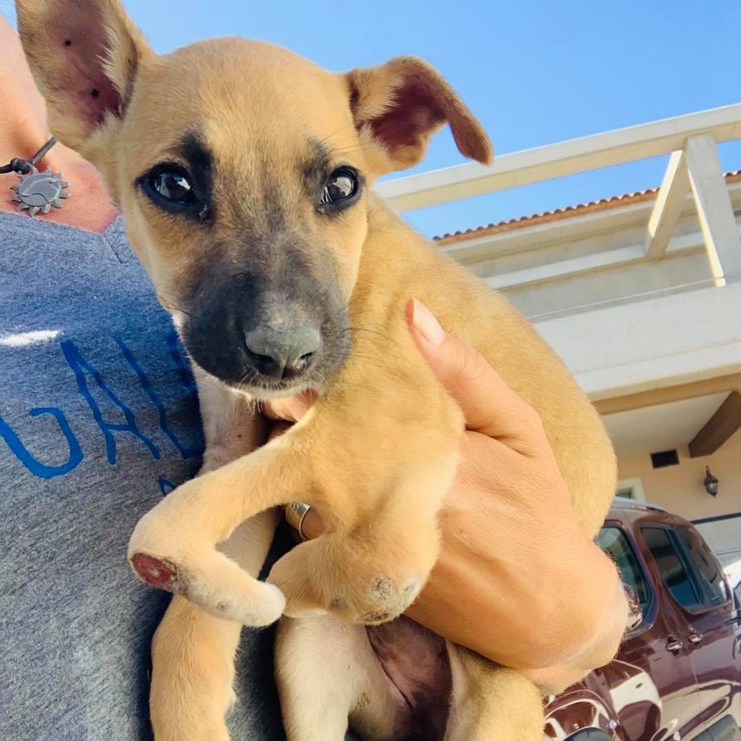 At the vet with this gorgeous baby girl found on the street with a leg deformity😢Heartbreaking💔& the amount of puppies on the streets. Same every summer but more puppies than ever now😠She was surviving like this but phew we've got her❤️Plz help  🙏🏻❤️
