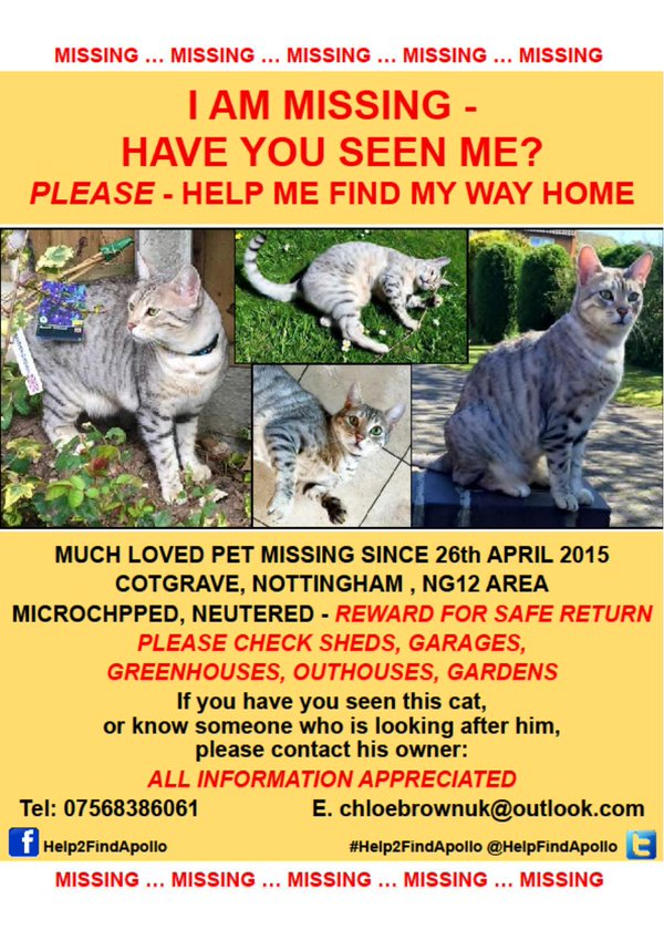 Please keep up the search for this handsome Very Light #Grey #Tabby who has never been seen for quite a few years now. Uncharacteristically disappeared overnight and didn't come home, so presumably someone adopted him, thinking him a stray. Your Neighbour? Please @HelpFindApollopic.twitter.com/qpek4e4rC9