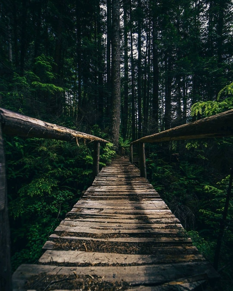 Forested wooden paths, my favorite kind of hike. #imagesofcanada #insidecanada #vancityfeature #hellobc #viawesome #pixelandlens #sonyalpha #explorecanada #imagesofcanada #canadasworld #stayandwander #artofvisuals #neverstopexploring #ourplanetdai… https://instagr.am/p/CCeBRwWBRC3/pic.twitter.com/bC1x1sZ1nA