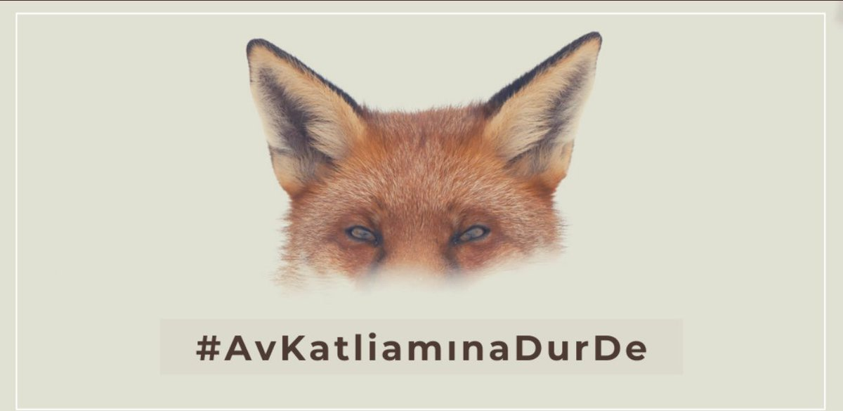 #AvKatliamınaDurDe https://t.co/ftC0ax3eWp