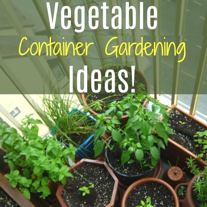 Vegetable Container Gardening Ideas! For Indoor Or Outdoor Gardening!  https://dianfarmer.com/vegetable-container-gardening-ideas-for-indoor-or-outdoor-gardening/…  #containergardening #instagardening #gardening101 #gardenersworld #veggiepatch #myplants #indoorgardening #organicgarden #houseplantdiary #girlswithplants #lifearoundplants #planpic.twitter.com/ltv0wV9X27