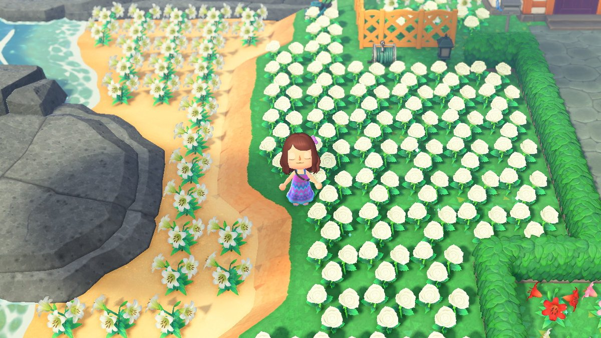 I need space, anyone want any of these flowers? No tip or limit, I just want them gone lol  #AnimalCrossingNewHorizions #ACNH #acnhflowers #acnhtrading https://t.co/dcwJCWtZuV