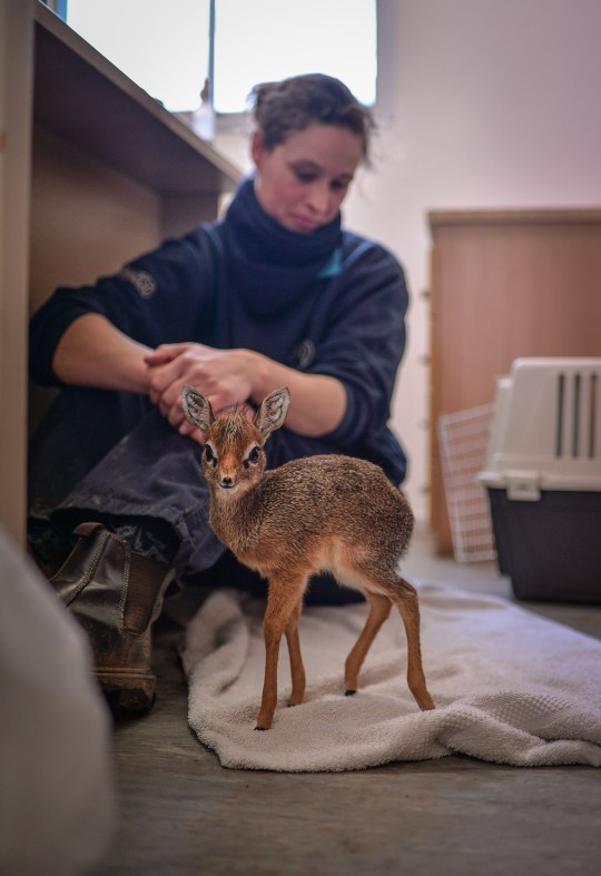 Unsolicited Dik-Diks (@UnsolicitedDiks) on Twitter photo 10/07/2020 21:15:24